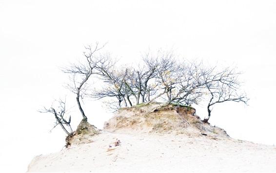Обои Холм, деревья, белый фон