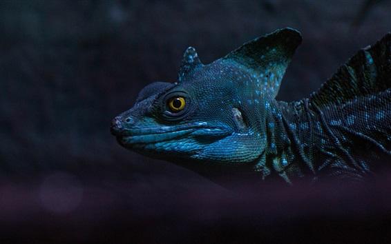 Papéis de Parede Iguana, anfíbio