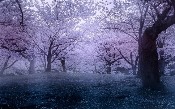Papéis de Parede Japão, sakura, primavera, parque, flores