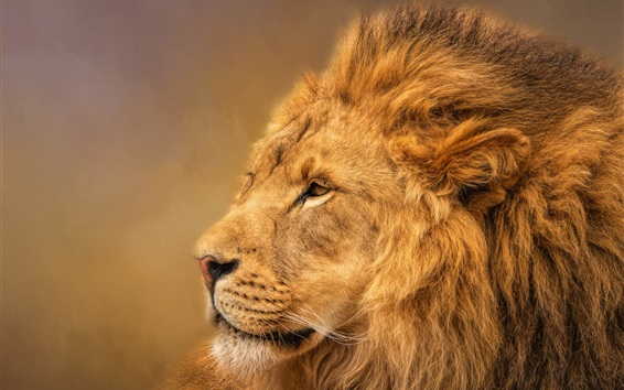 壁纸 狮子,鬃毛,国王