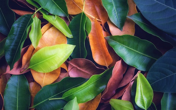 Wallpaper Many leaves, green, yellow, red, texture background