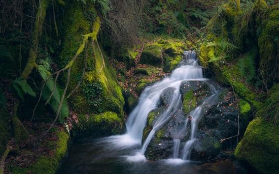 Wallpaper Moss, stream, waterfall
