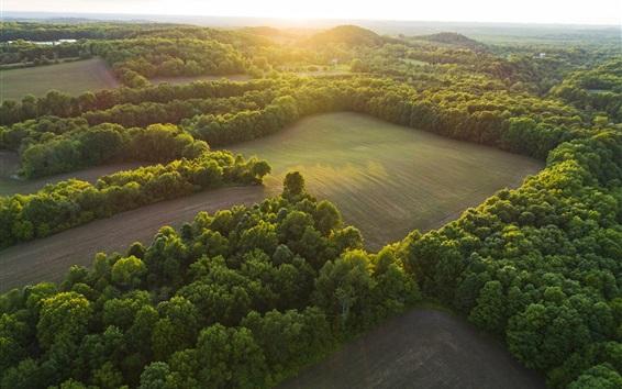 Обои Природный пейзаж, вид сверху, деревья, зеленые поля