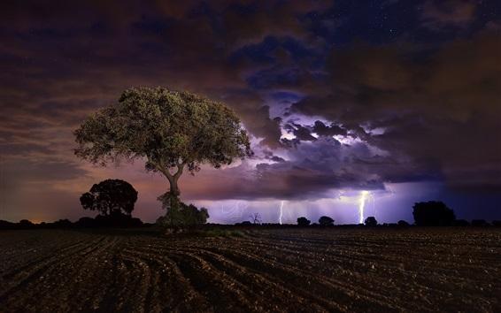 배경 화면 밤, 들판, 나무, 번개, 구름
