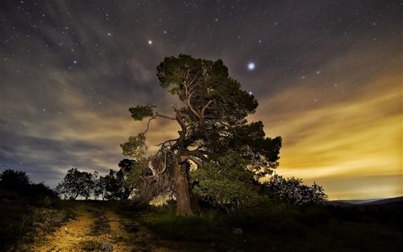 Обои Ночь, деревья, звезды