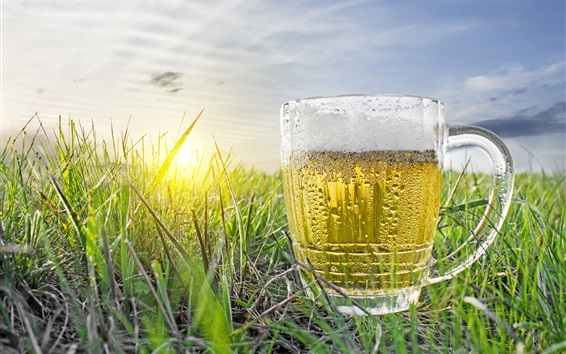 Wallpaper One cup of beer, water droplets, cold, grass