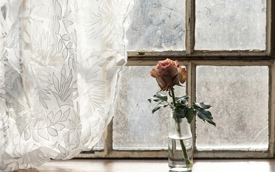 Wallpaper One rose, bottle, curtains, window