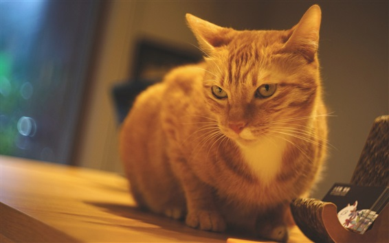 壁紙 オレンジの猫、テーブル、部屋