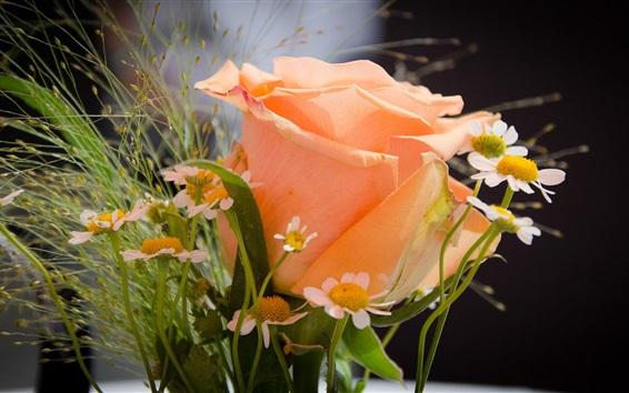 Wallpaper Orange rose and chamomile