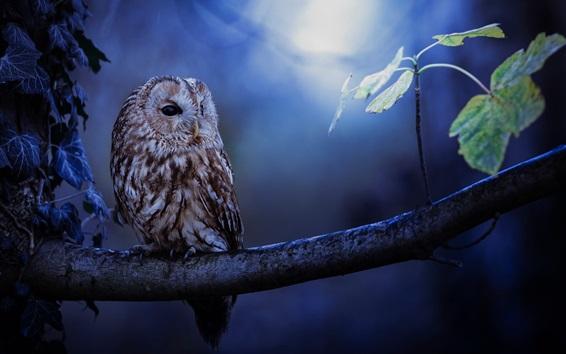 Papéis de Parede Coruja, noite, árvore, folhas