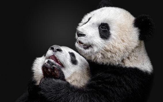Papéis de Parede Panda e panda cub, fundo preto