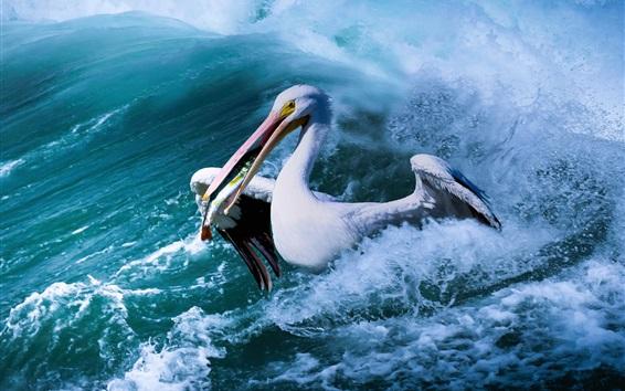 Wallpaper Pelican catch fish, sea, waves