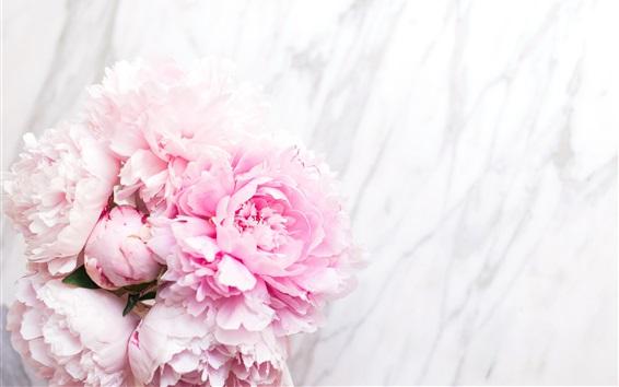 Wallpaper Pink peonies, tender