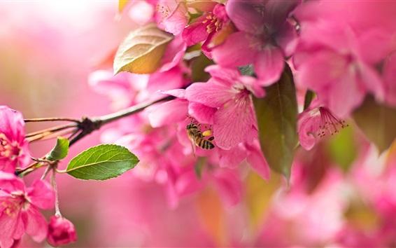 Papéis de Parede Sakura rosa, flor, abelha, primavera