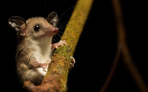 Papéis de Parede Rato, árvore, noite