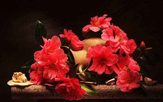 Papéis de Parede Flores vermelhas, camélia, vaso