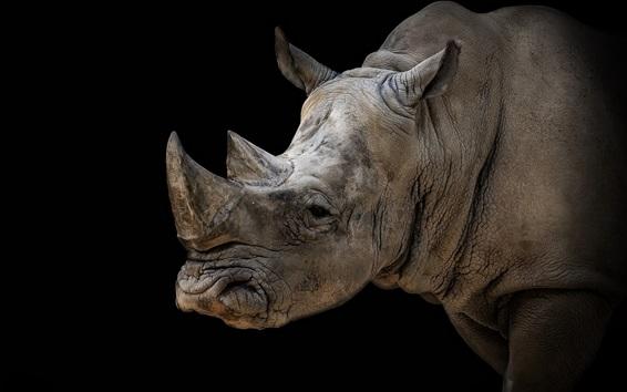 Papéis de Parede Rinoceronte, fundo preto