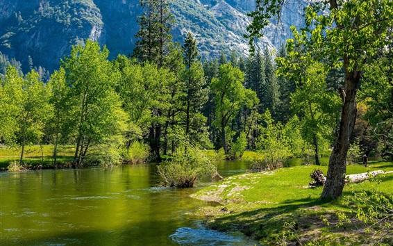 Wallpaper River, trees, green