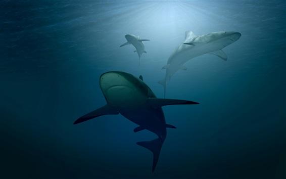 Wallpaper Shark, underwater, hunting