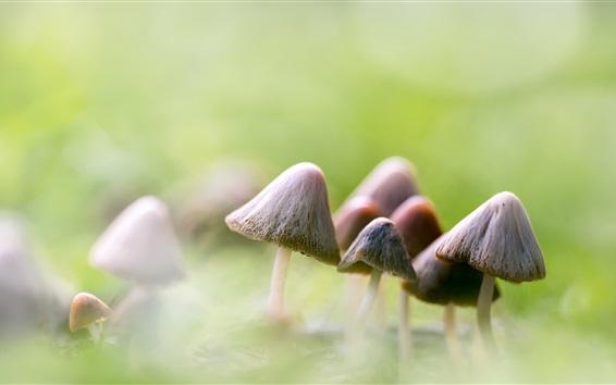 Fond d'écran Quelques champignons, arrière-plan flou