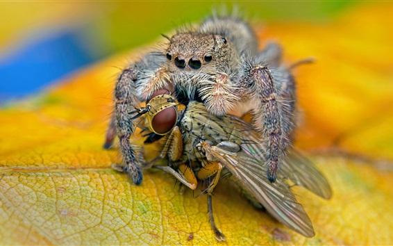 Papéis de Parede Refeição de aranha, inseto