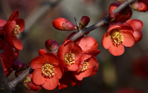 Wallpaper Spring, red flowers, tree