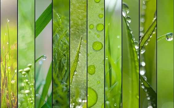 Wallpaper Spring theme, grass, green, water drops