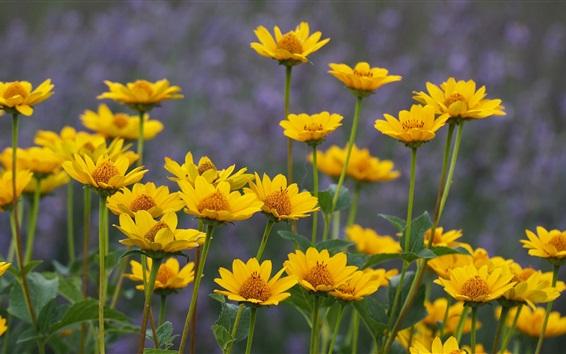 壁紙 夏、黄色の花