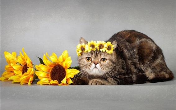 배경 화면 해바라기, 화환, 고양이