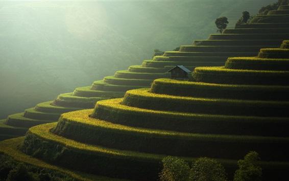 배경 화면 계단식 논, 녹색, 사면, 아름다운