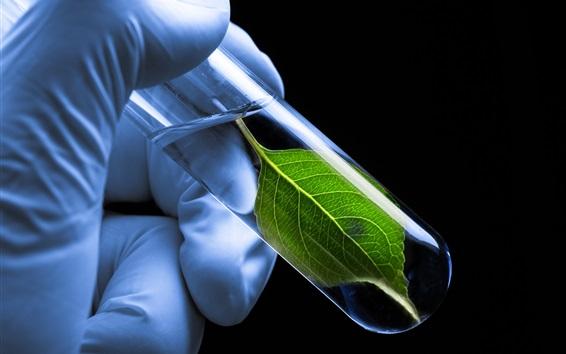 Wallpaper Test tube, green leaf, gloves