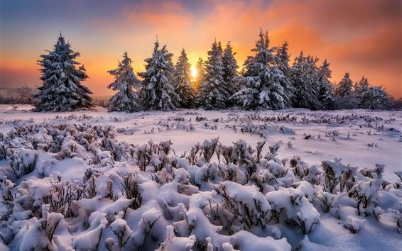 Обои Толстый снег, деревья, утро, зима