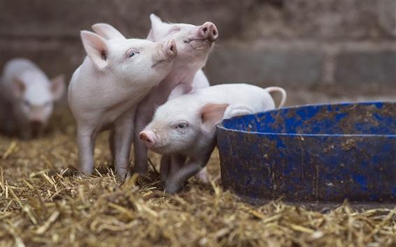 Papéis de Parede Três porquinhos