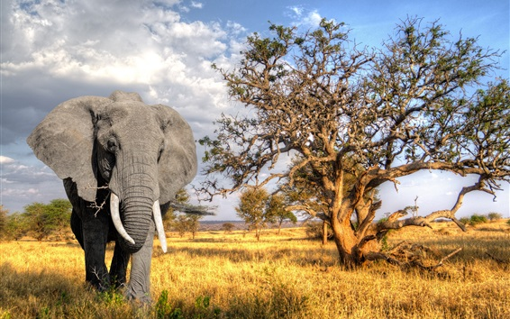 Wallpaper Trees, grass, elephant