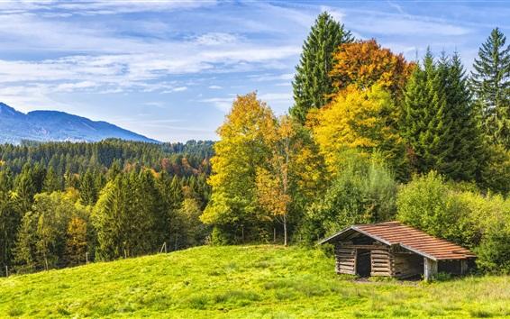 Papéis de Parede Árvores, grama, cabana, natureza