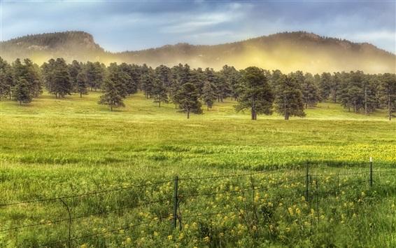 Papéis de Parede Árvores, grama, manhã, nevoeiro, verão
