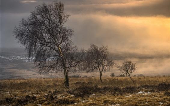 Wallpaper Trees, grass, morning, fog