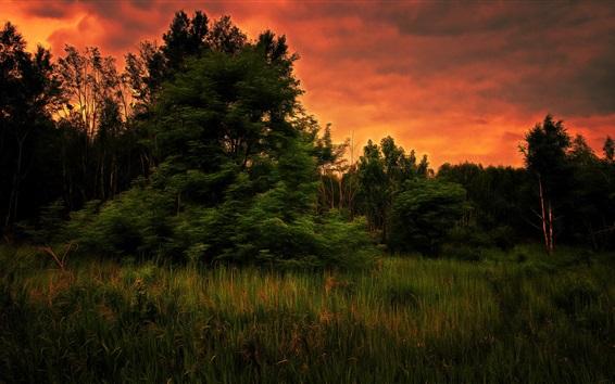 Papéis de Parede Árvores, grama, pôr do sol, estilo de arte