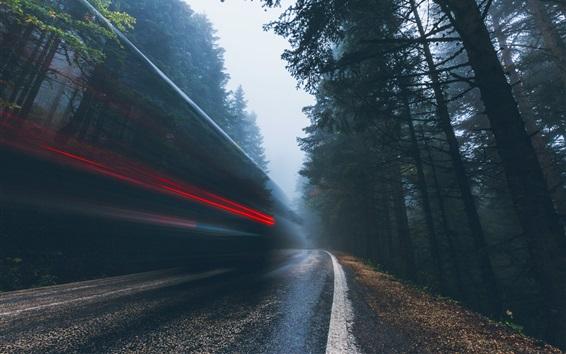 Wallpaper Trees, road, light lines, speed