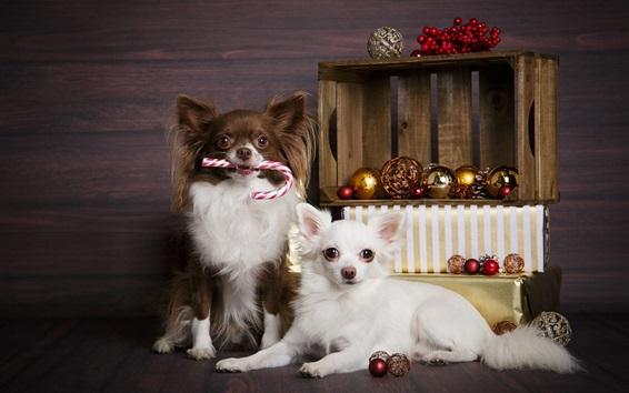 Fond d'écran Deux chiens, boules de Noël