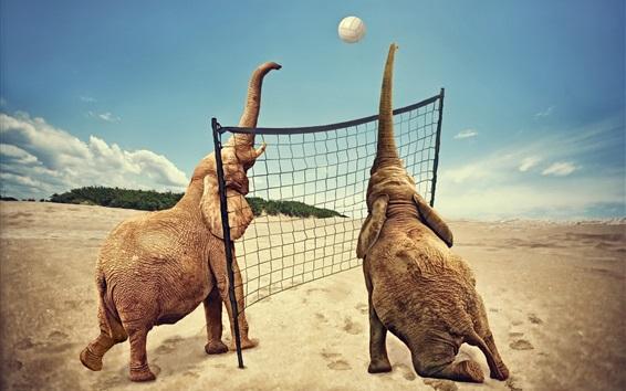 Papéis de Parede Dois elefantes jogam vôlei