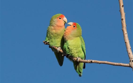 Wallpaper Two green parrots, blue sky