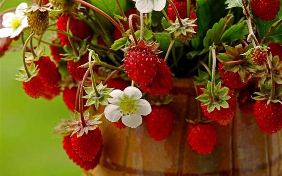 壁紙 熟したイチゴ、花