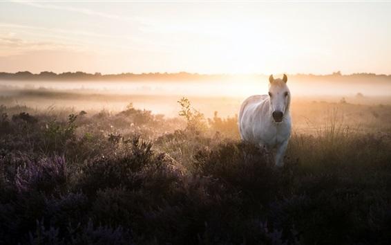Papéis de Parede Cavalo branco, arbustos, nevoeiro, manhã