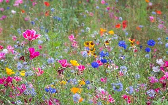 Wallpaper Wildflowers, spring, colorful, pink, yellow, blue