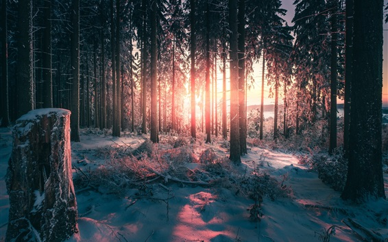 Wallpaper Winter, forest, snow, trees, sun rays