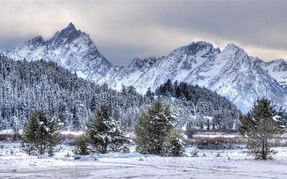 Fond d'écran Hiver, neige, arbres, montagnes, paysages de la nature