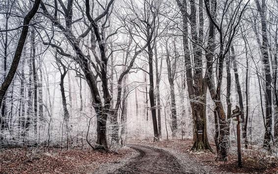 壁纸 冬天,树木,雪,森林