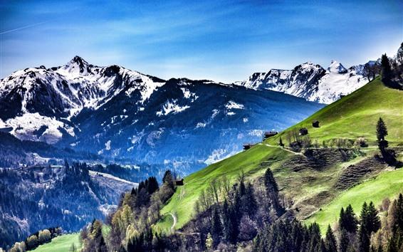 Обои Австрия, горы, склон, деревья, деревня, голубое небо