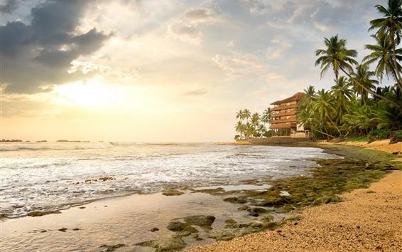 壁紙 ビーチ、ヤシの木、海、家、熱帯